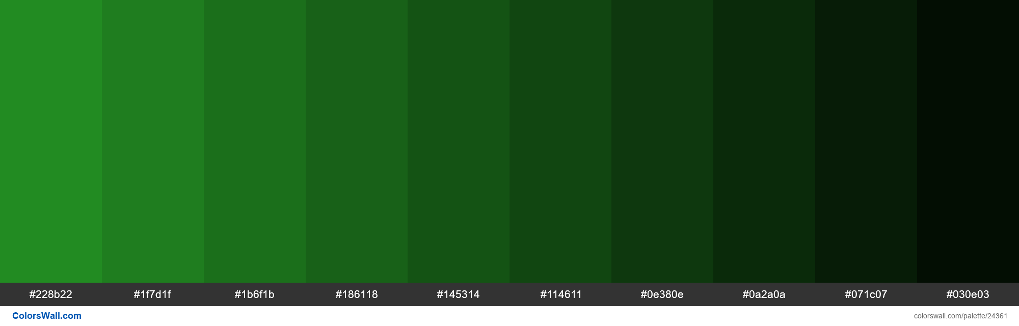 Shades of Forest Green #228B22 hex color - #24361