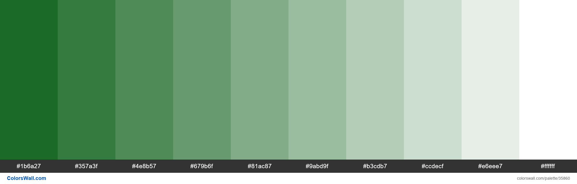 Tints XKCD Color deep green #02590f hex - #35860