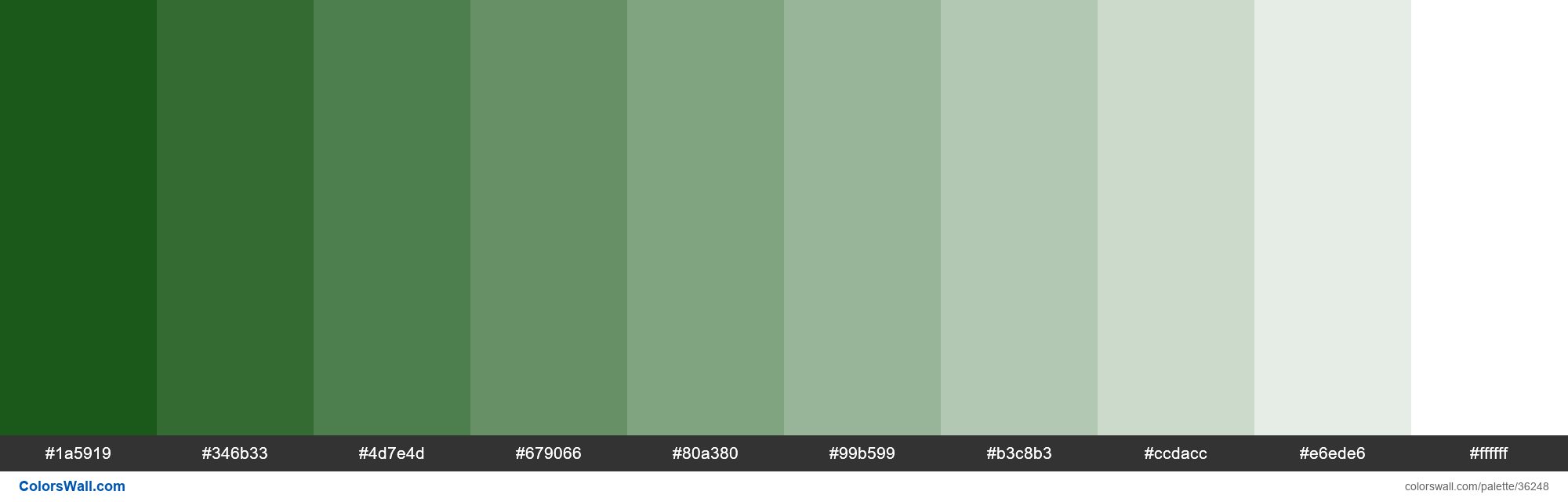 Tints XKCD Color racing green #014600 hex - #36248